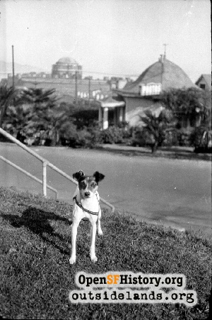 LeRoy Family Dog, Presidio of San Francisco