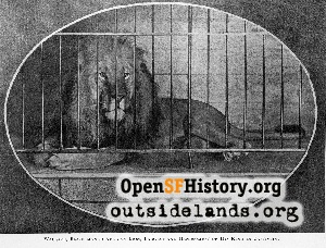 Wallace the Lion,1901
