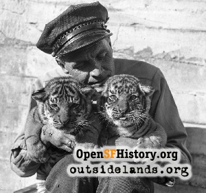 Tiger Cubs at the Zoo,1942