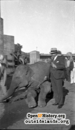 San Francisco Zoo,Jul 1940