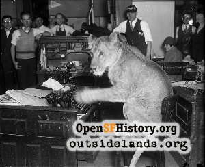 Lion at SF Call office,1925