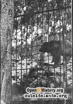 Monarch the Grizzly,1910