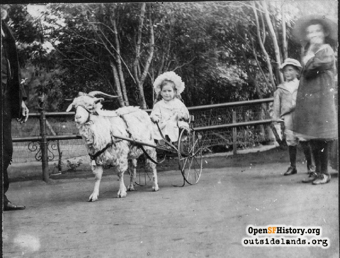Child in goat cart in Golden Gate Park