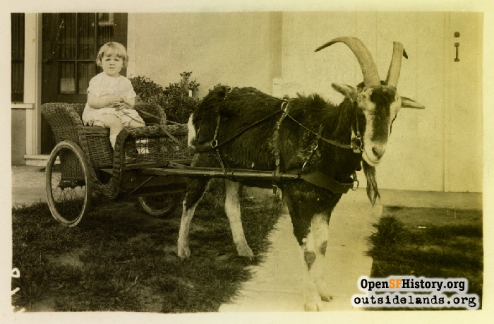 Child in goat cart, circa 1910